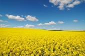 où l'agriculture règne