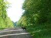 Forêt du Chatillonnais